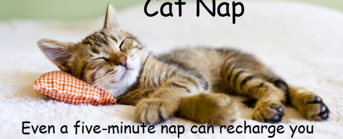 How A Cat Nap Helps To Be More Productive